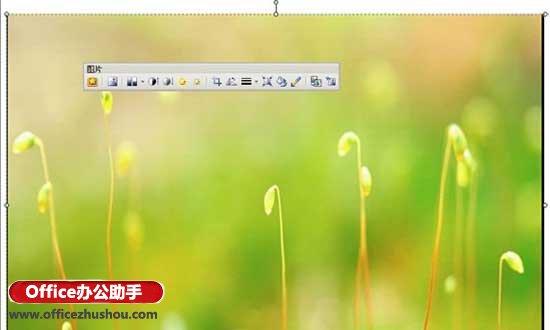 WPS演示的母版功能实现幻灯片的背景的操作步骤截图